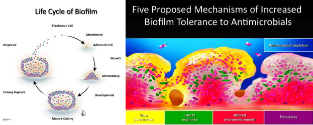 Biofilm management and control